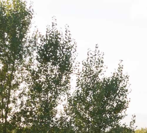 before-foliage-blending1