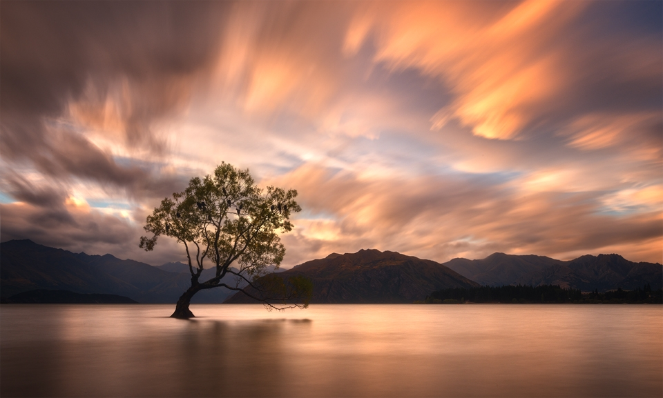That Wanaka Tree Sunset 5
