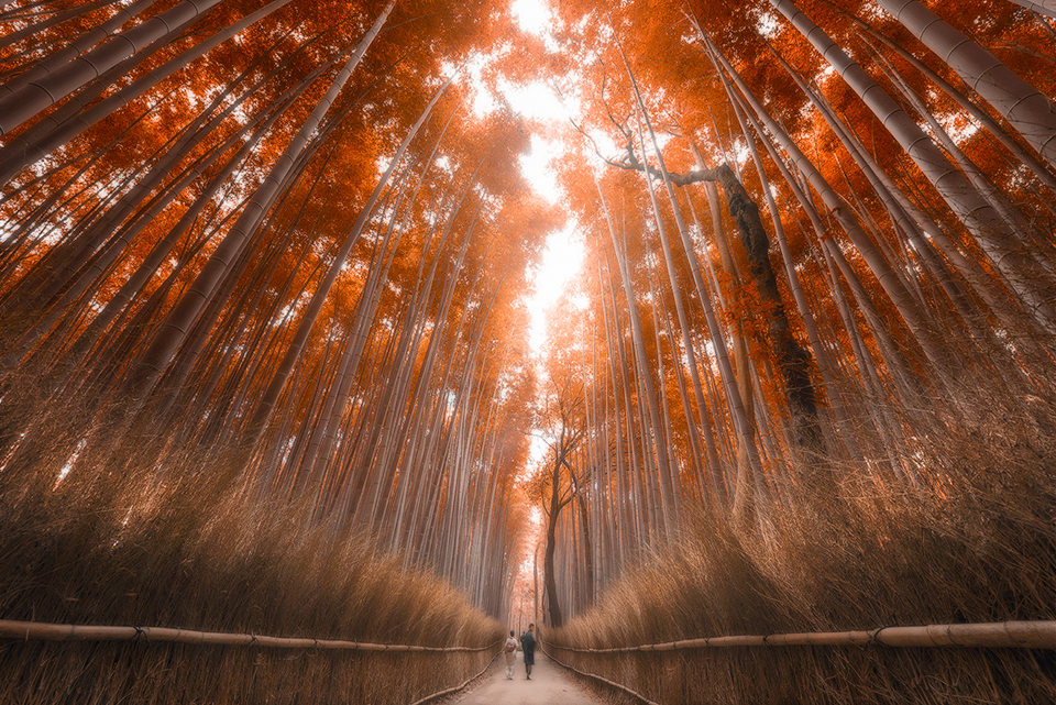 Autumn-bamboo-forest5