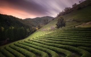 boseong-tea-fields-sunset-nd-filter