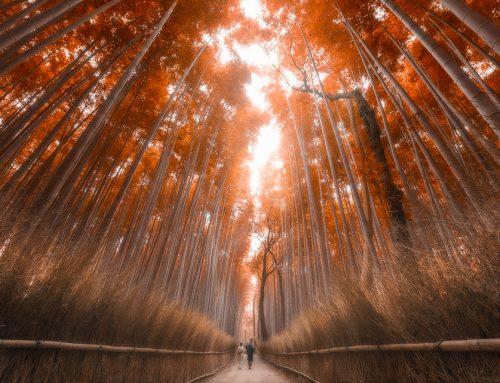 Photoshop Secrets 22: How To Create Autumn Colours