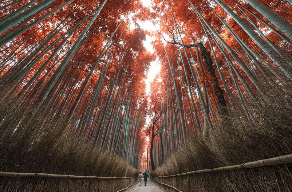 create autumn colours in photoshop