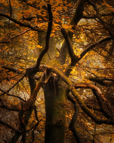 An Intimate View on Woodland Photography