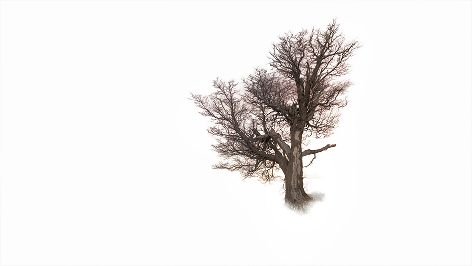 How To Select Branches in Photoshop