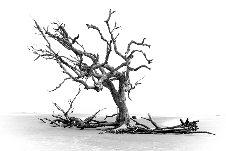 Black and White Photo Editing in Photoshop
