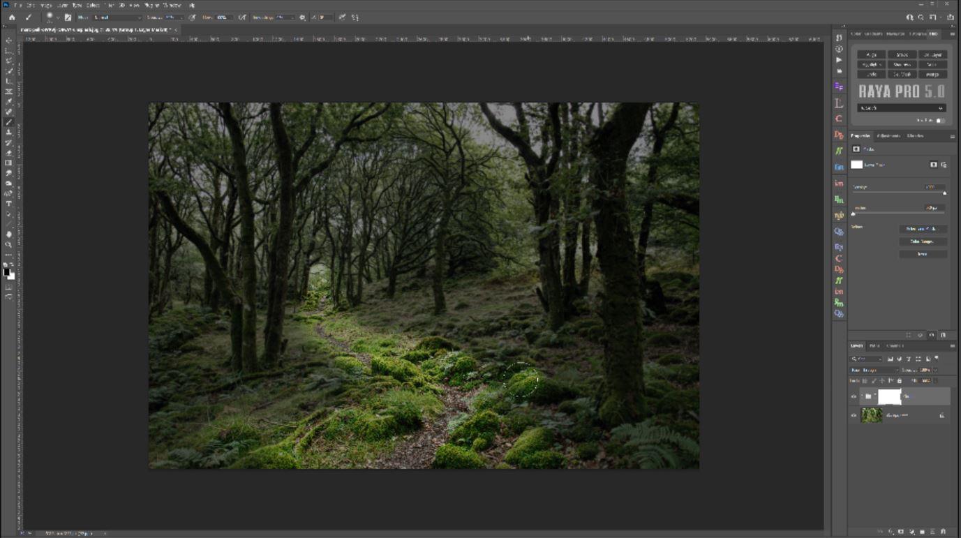 woodland photoshop