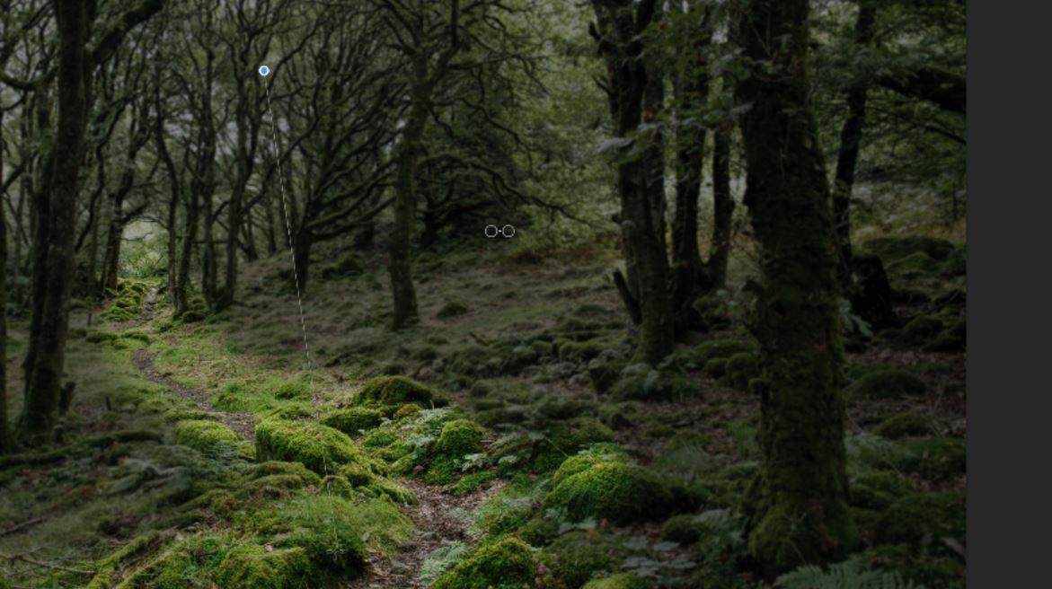 editing woodland