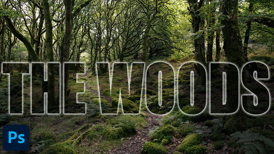 How to Make a Woodland Photo More Inviting