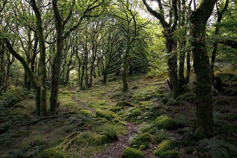 improve my woodland photo
